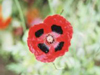 Red Cross Poppy